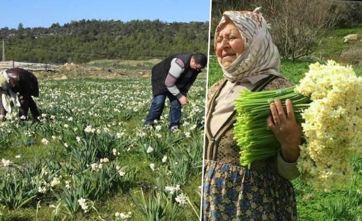 Karaburun'da çiçek üreticileri zorda
